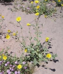 desert flowers stock photo2