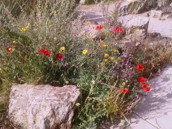 tucson flowers