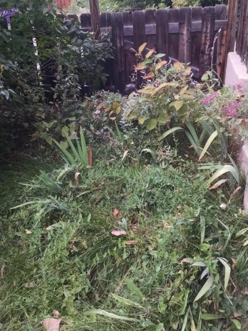 back garden weeds
