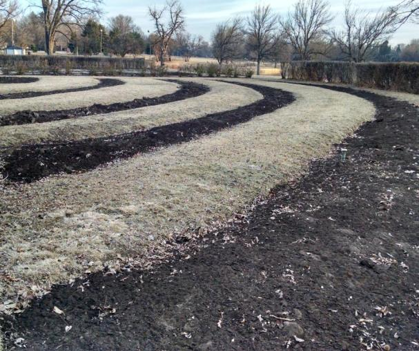dry flower beds