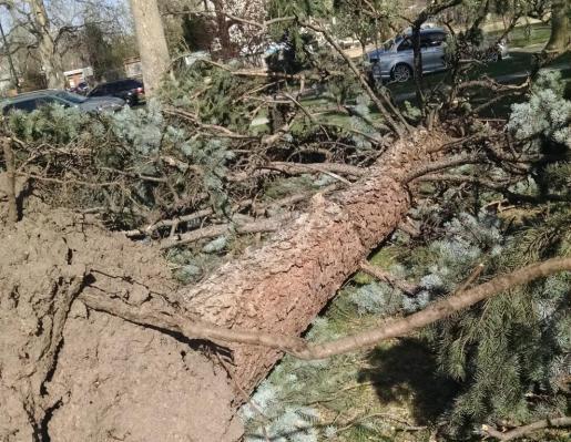 down tree2