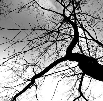 bw_tree